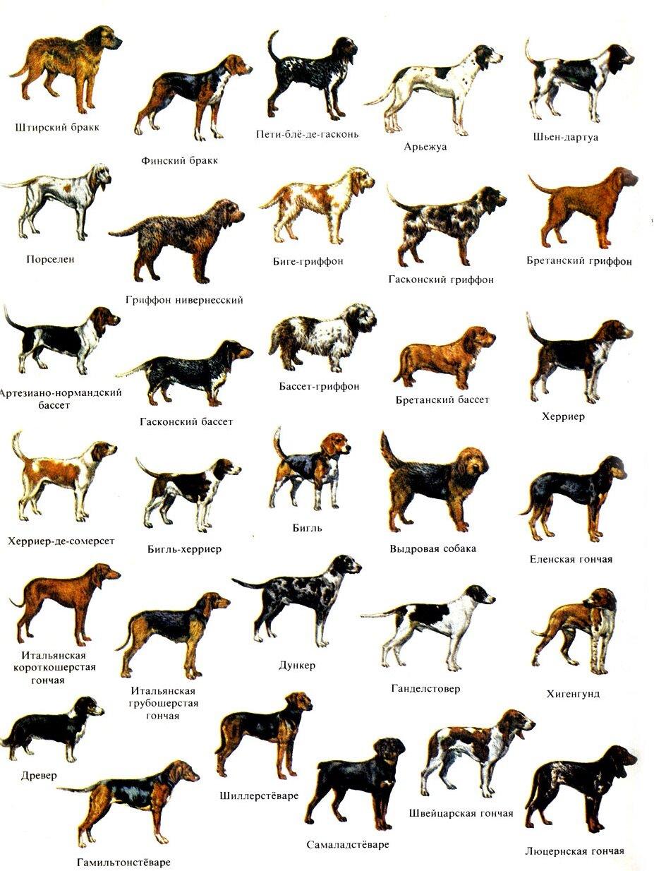 Крупные породы собак с картинками и названиями