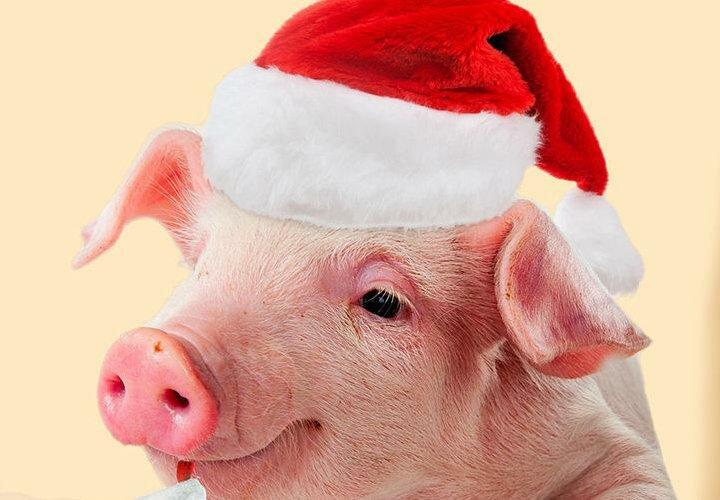 Днем рождения, прикольные картинки со свиньей 2019