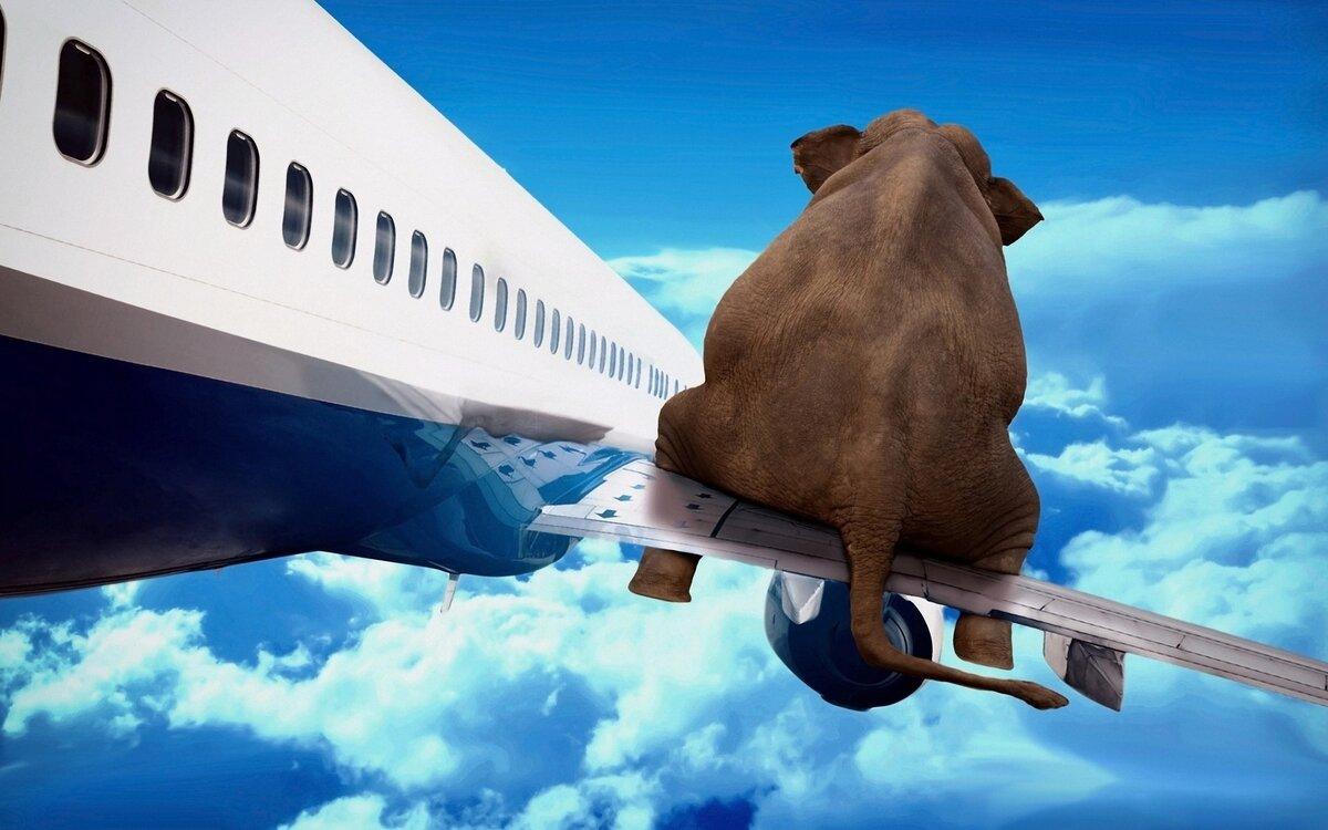 Открыток, картинки в пути самолет
