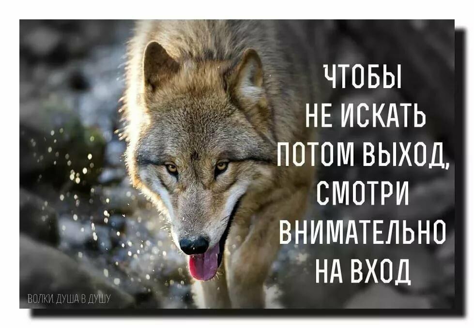 Фото волка с надписью