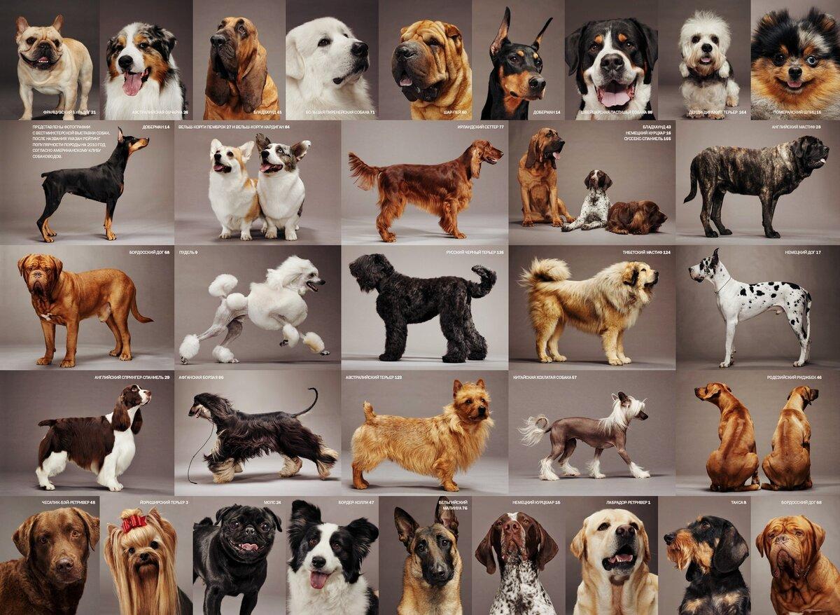 Собаки породы фото и названия