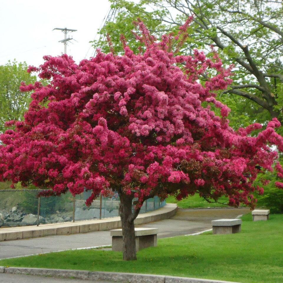 красивые деревья в москве фото прикреплённым почтовым отделением