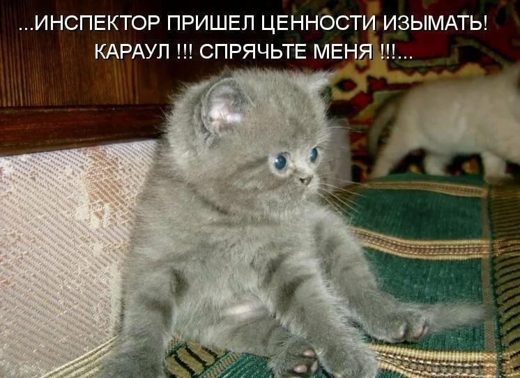 Надписи с картинками котята