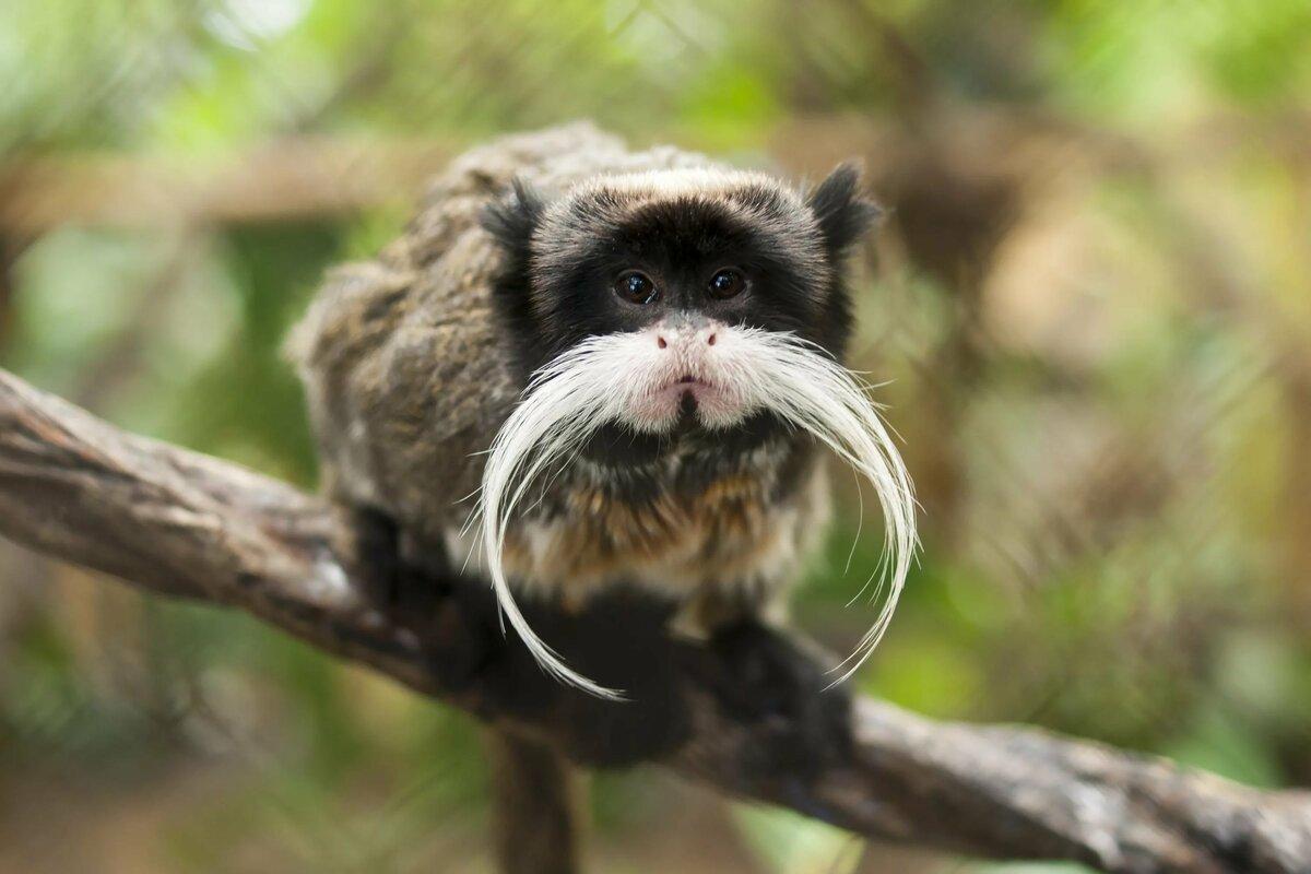 таком самые необычные животные мира фото и названия консервации