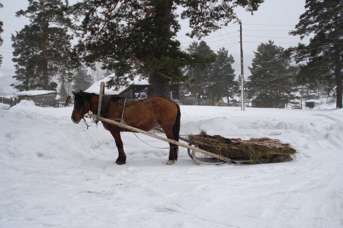 картинки сани запряженные лошадьми правильно