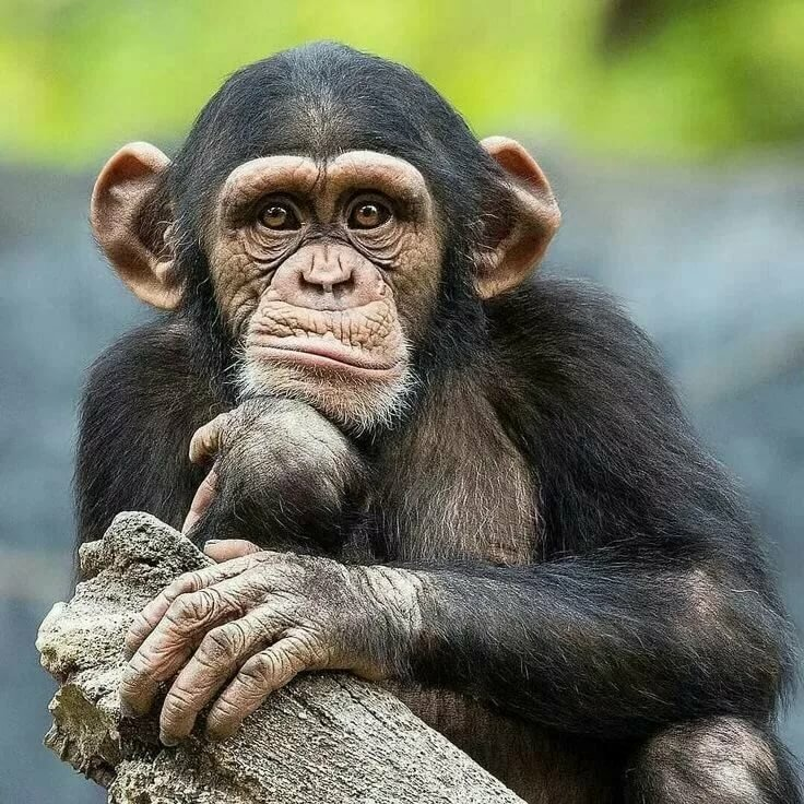 Приколы с обезьянками картинки