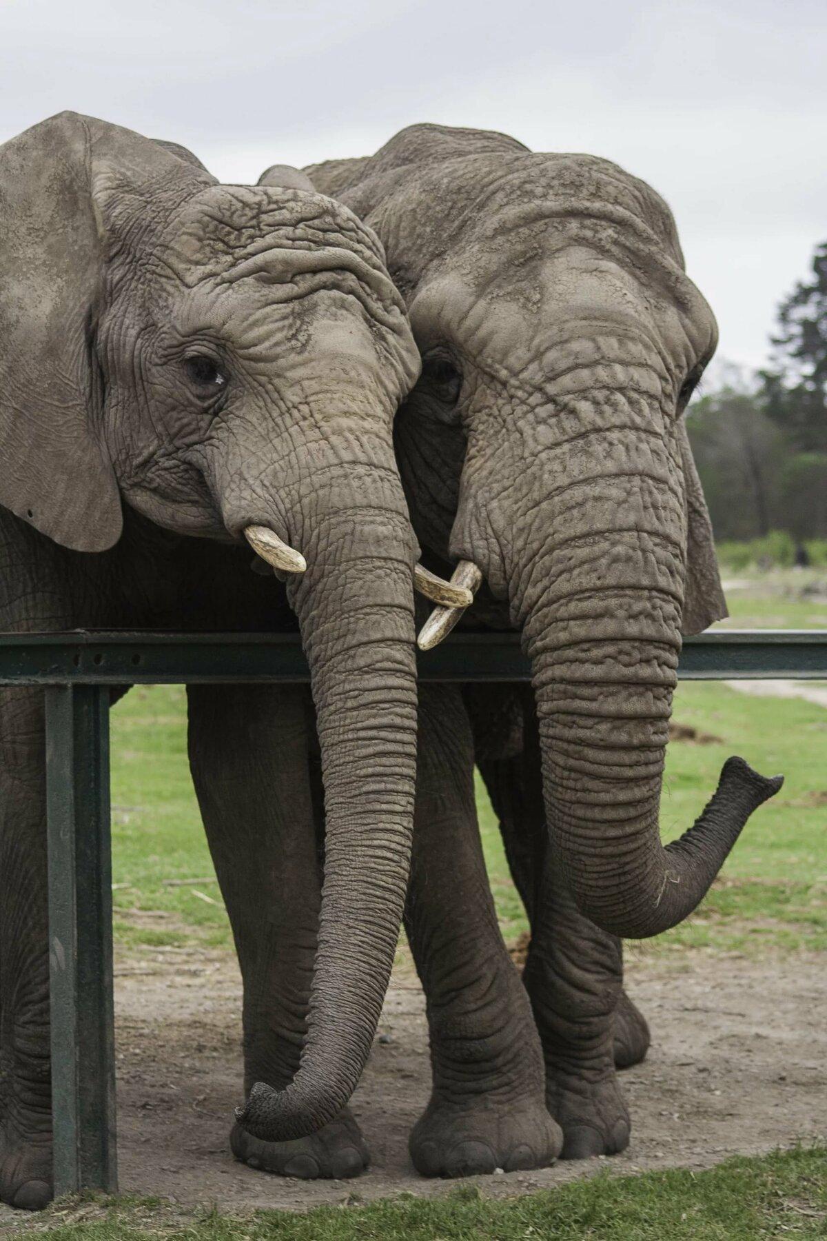 этому картинки слон хобот мастерица-рукодельница, изобретающая для