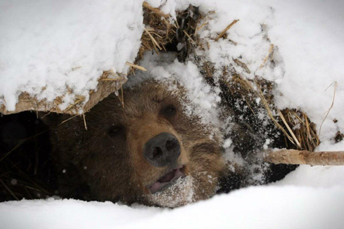 картинки медвежьей берлоги что чувствуешь, интересно