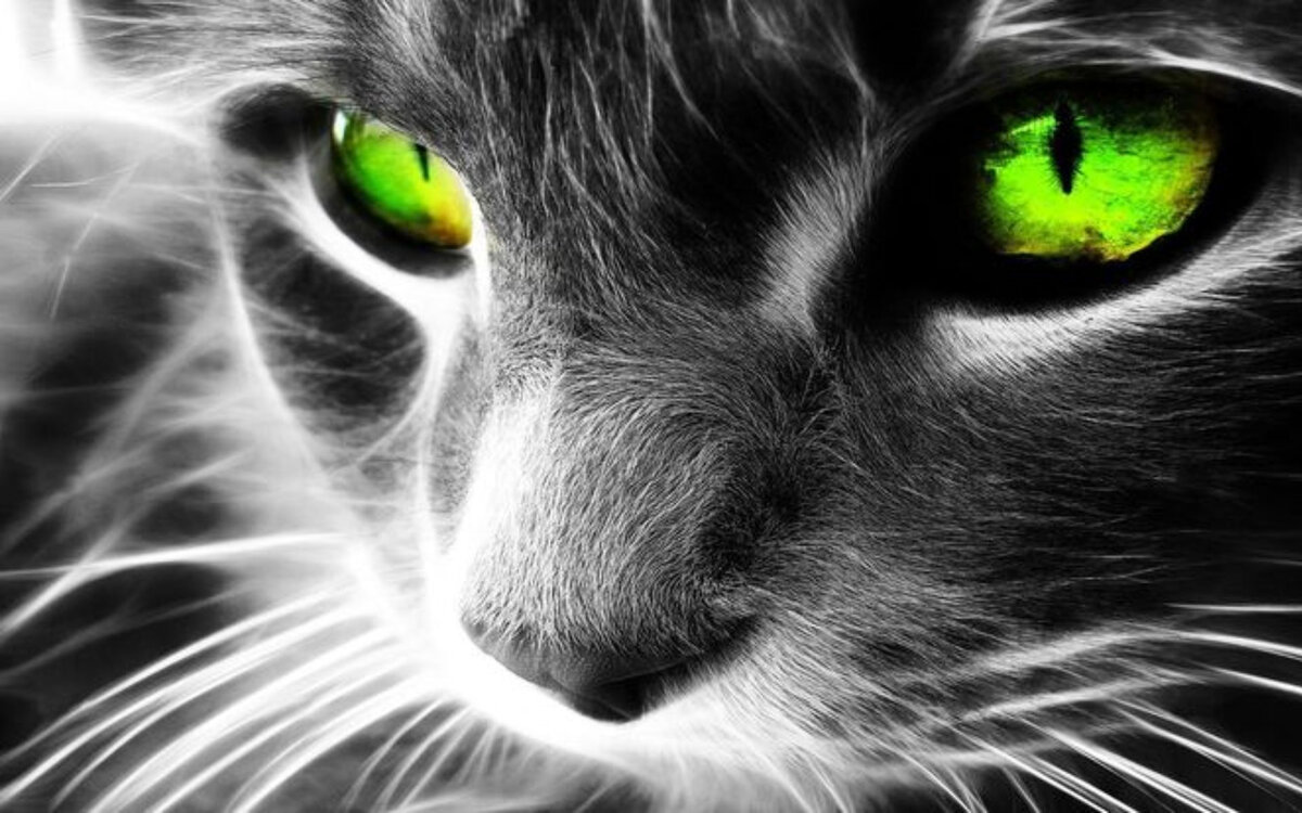 Кот классные картинки