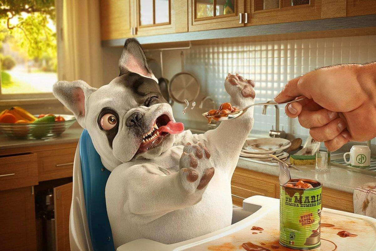 Для, картинки с юмором и животными