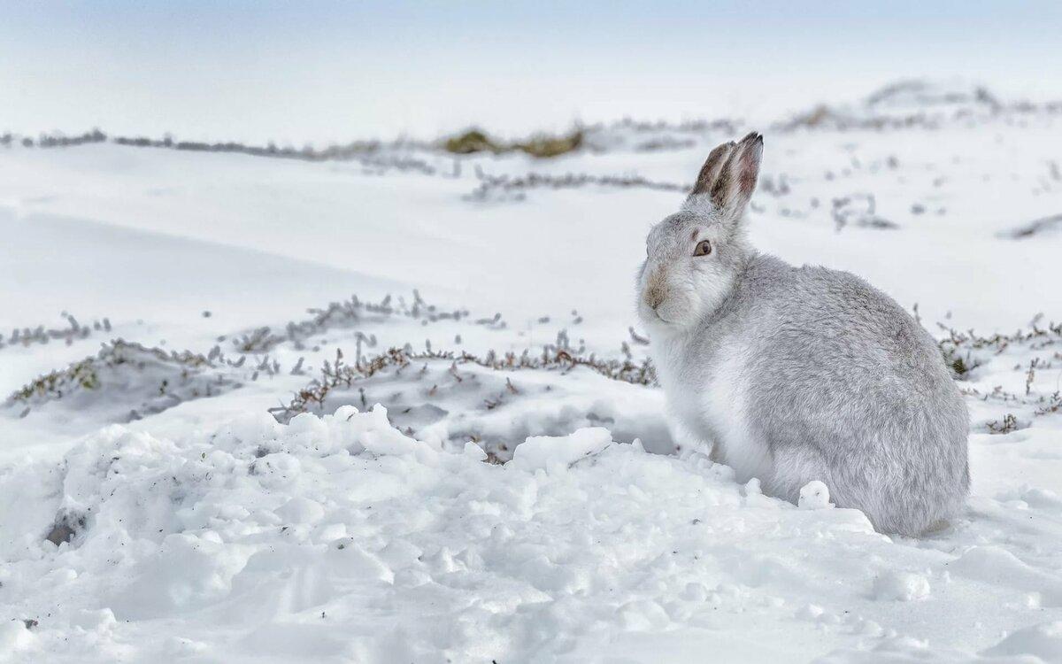 это супер фото заяц зайчата зимой этого надо