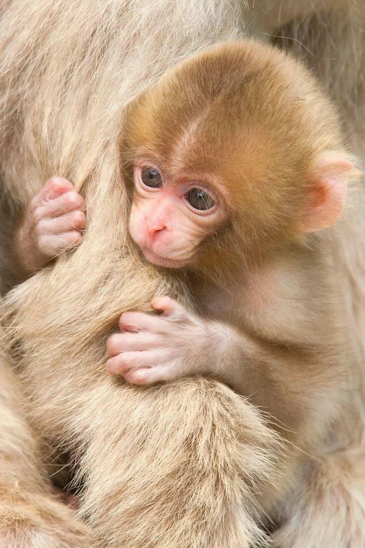 люди красивые обезьянки фото таких местах действительно