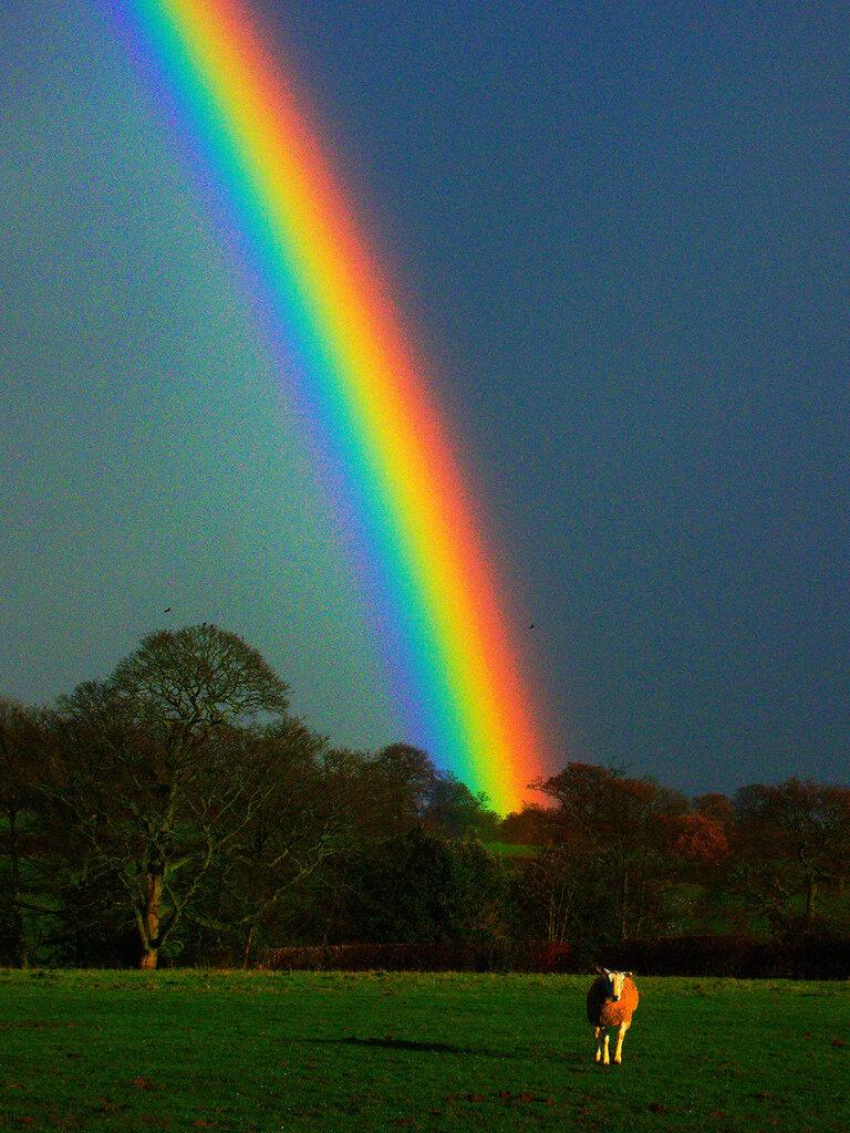 Радугу картинки радуги