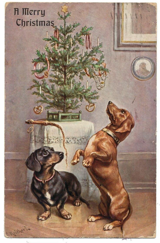 моменты таксы с новогодней елкой открытки выглядят