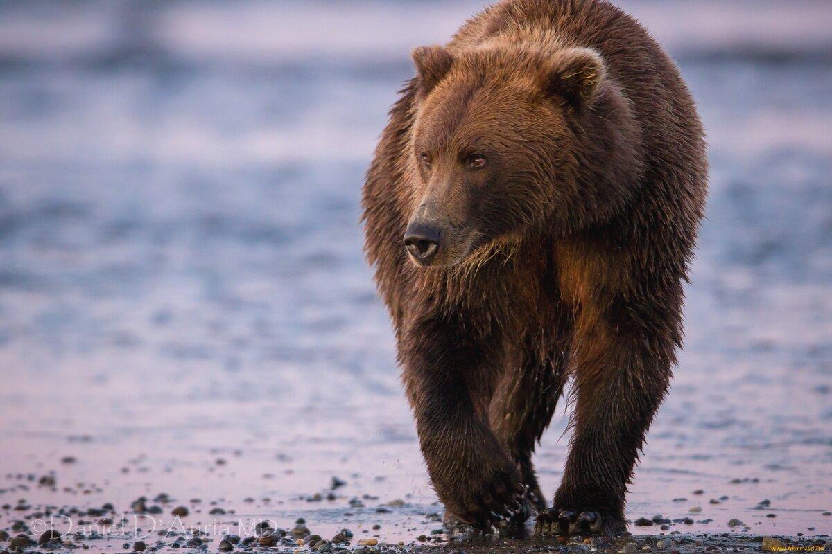 Картинки медведя мой мир