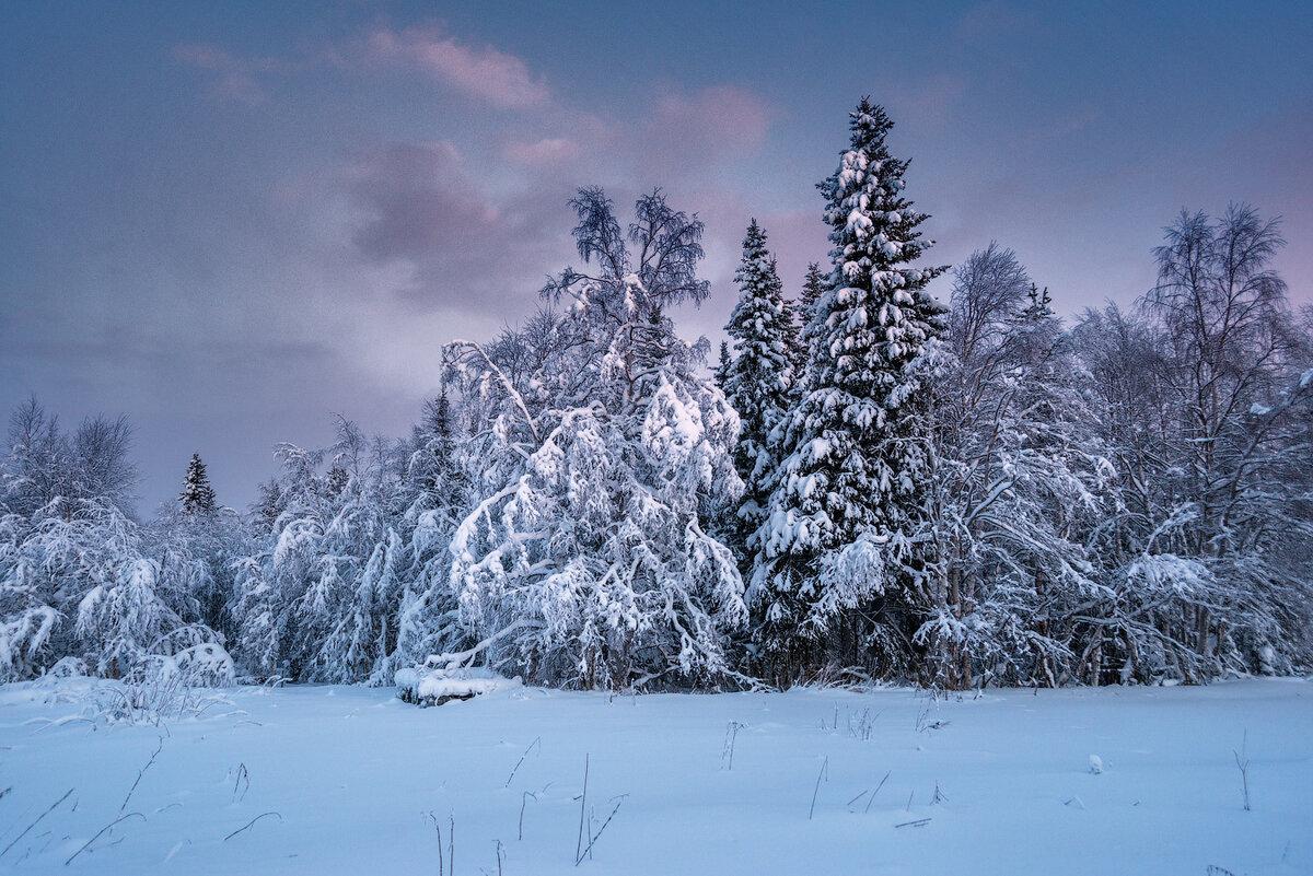 для самые красивые зимние пейзажи фото чёрного