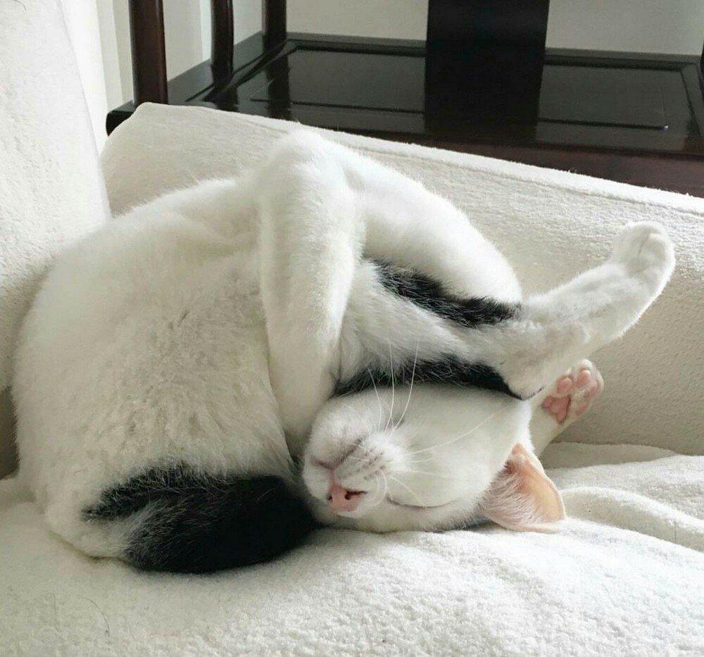 Боб, прикольные картинки про спящих