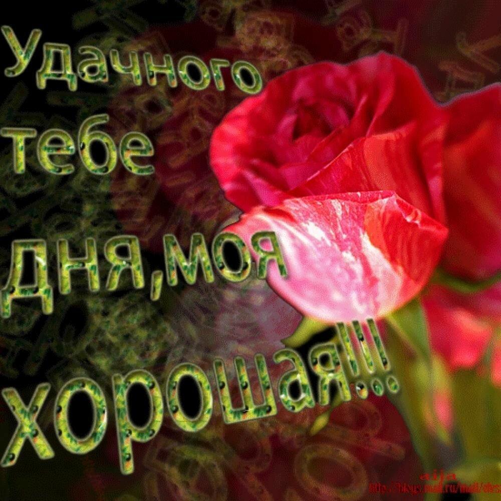 Картинки поздравлениями, картинки с пожеланиями хорошего дня милому