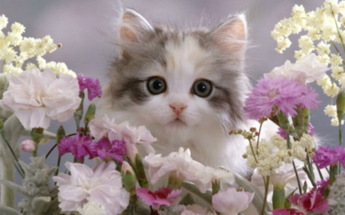Цветы и коты картинки