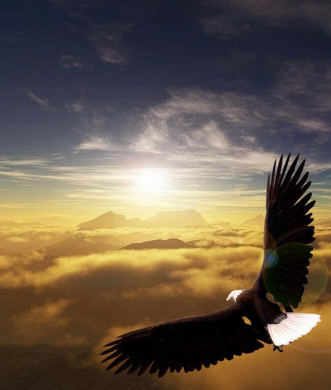 Открытка полет орла, поздравление мама