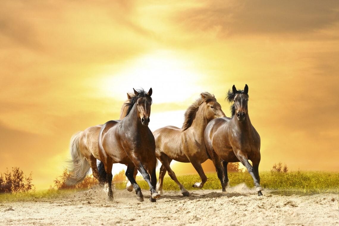 Постер бегущая лошадь