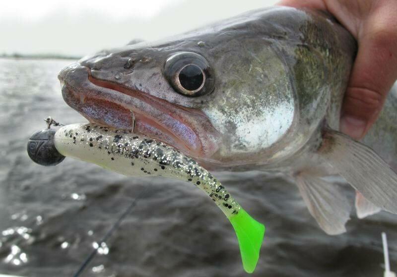 Ловля хищной рыбы способ