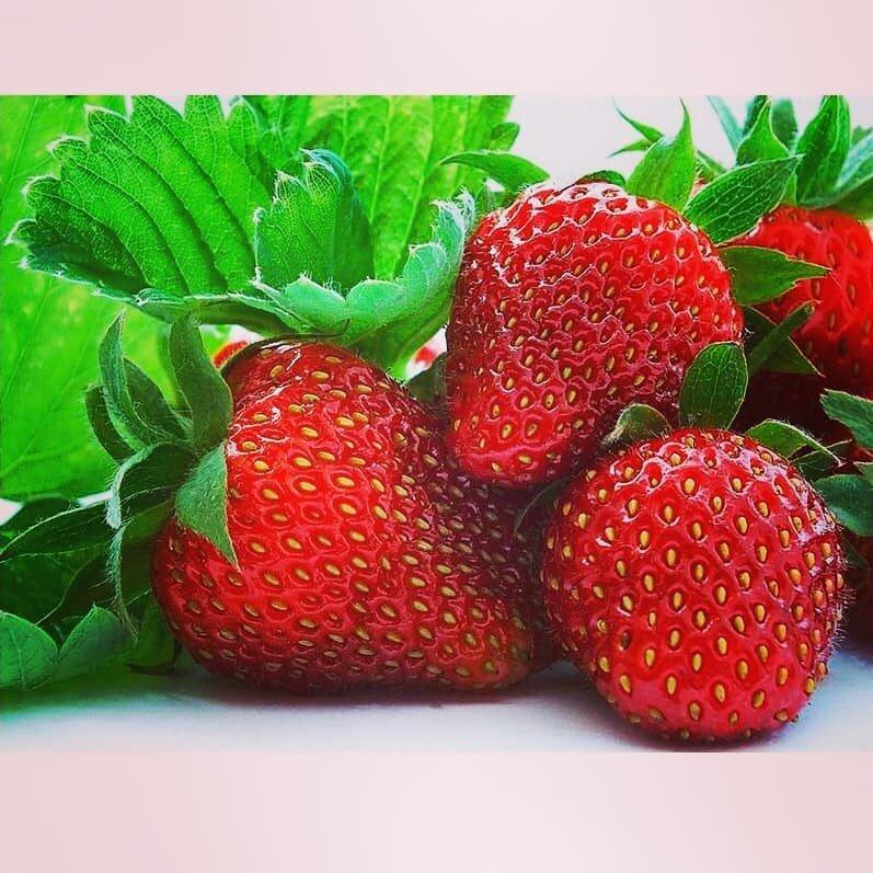 Домашняя ягодница клубника и земляника в Братске