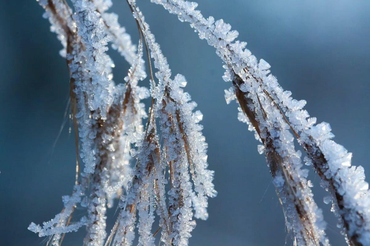 Картинка иней на деревьях зимой
