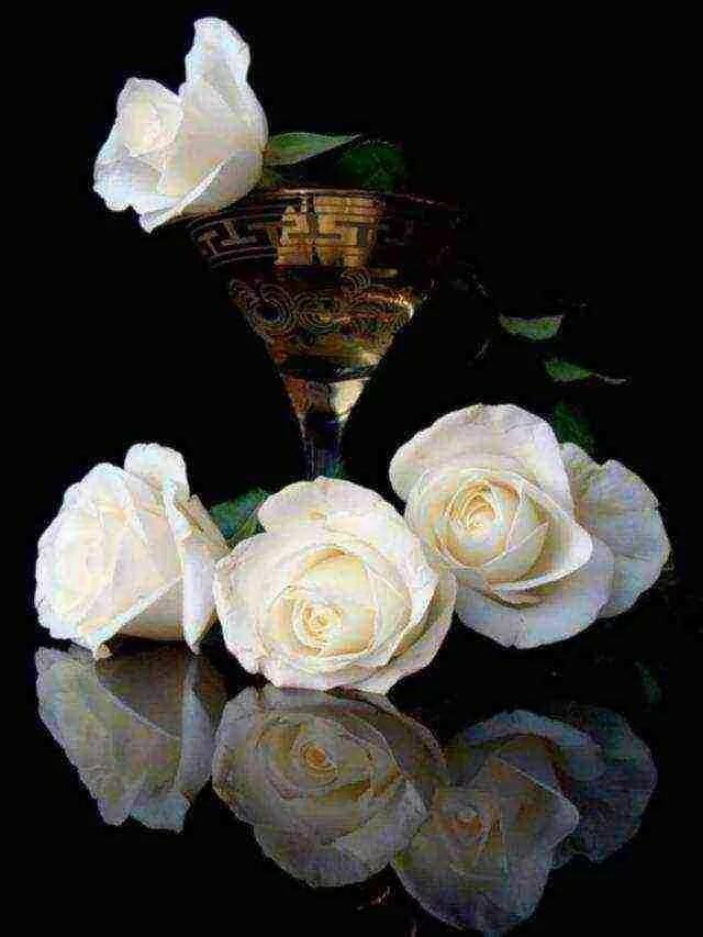 Анимационные открытки с белыми розами
