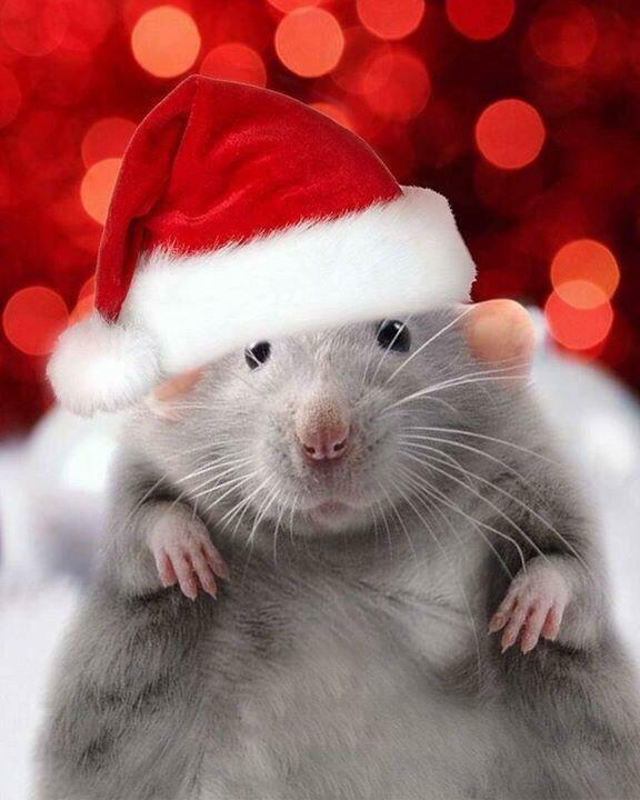 милые картинки с наступающим новым годом мышки нокиа было много