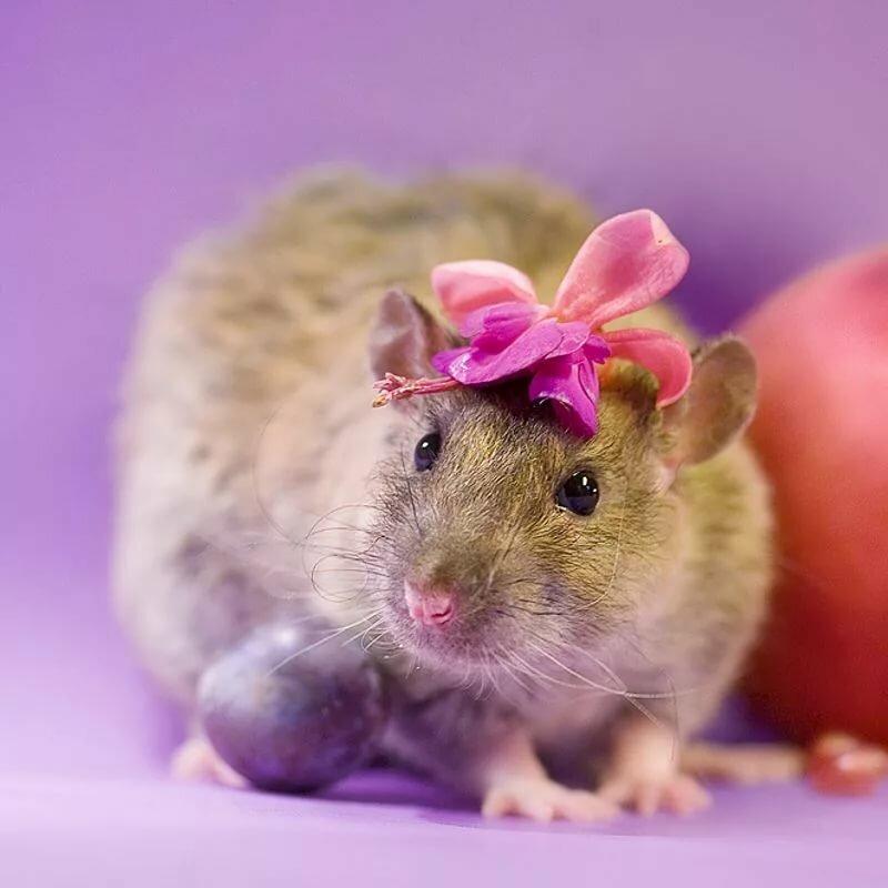 нежным типом мышки фото красивые и смешные сюжету