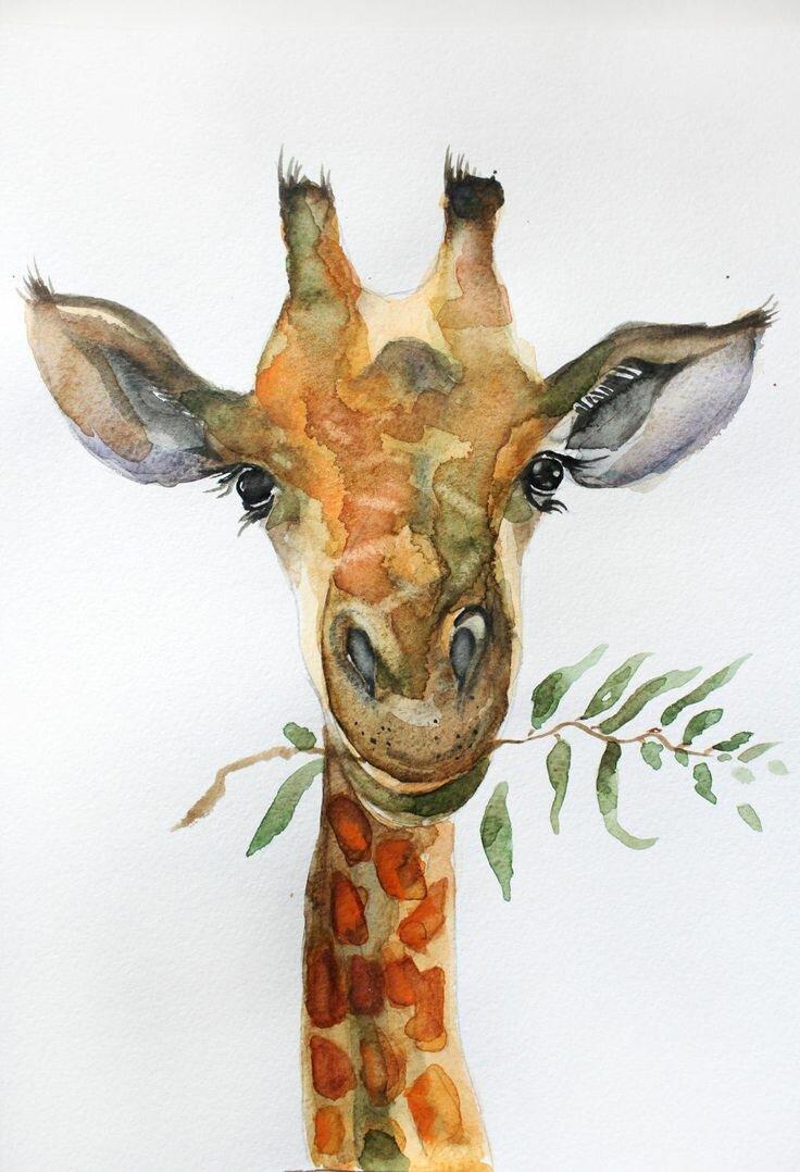Картинки с жирафами рисованные, картинки анимацию
