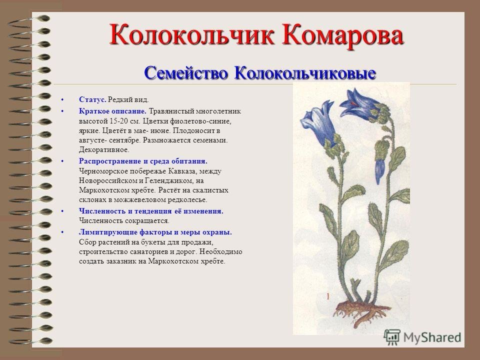 редкие растения картинки и краткое описание