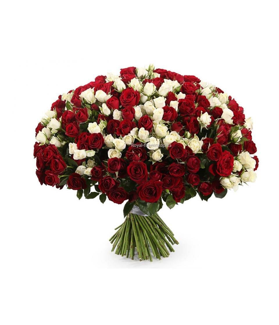 Купить букет 101 бордовая розы в киеве