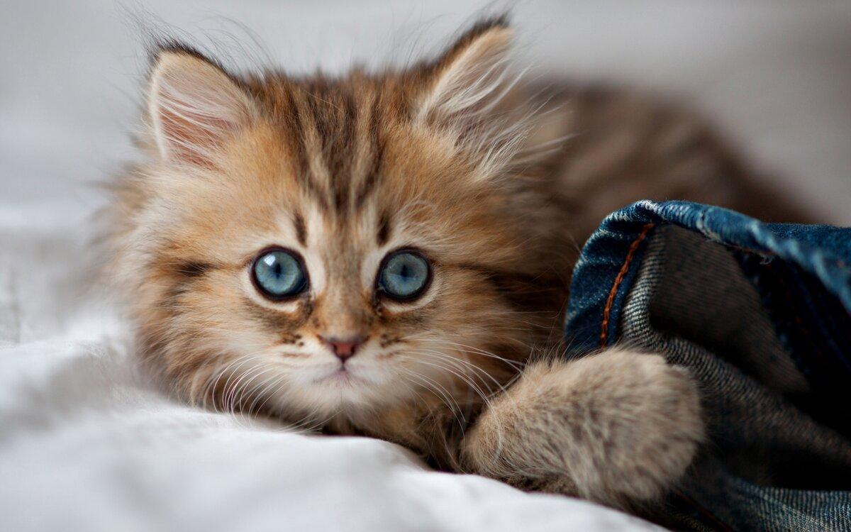 Самые милые картинки про животных в мире