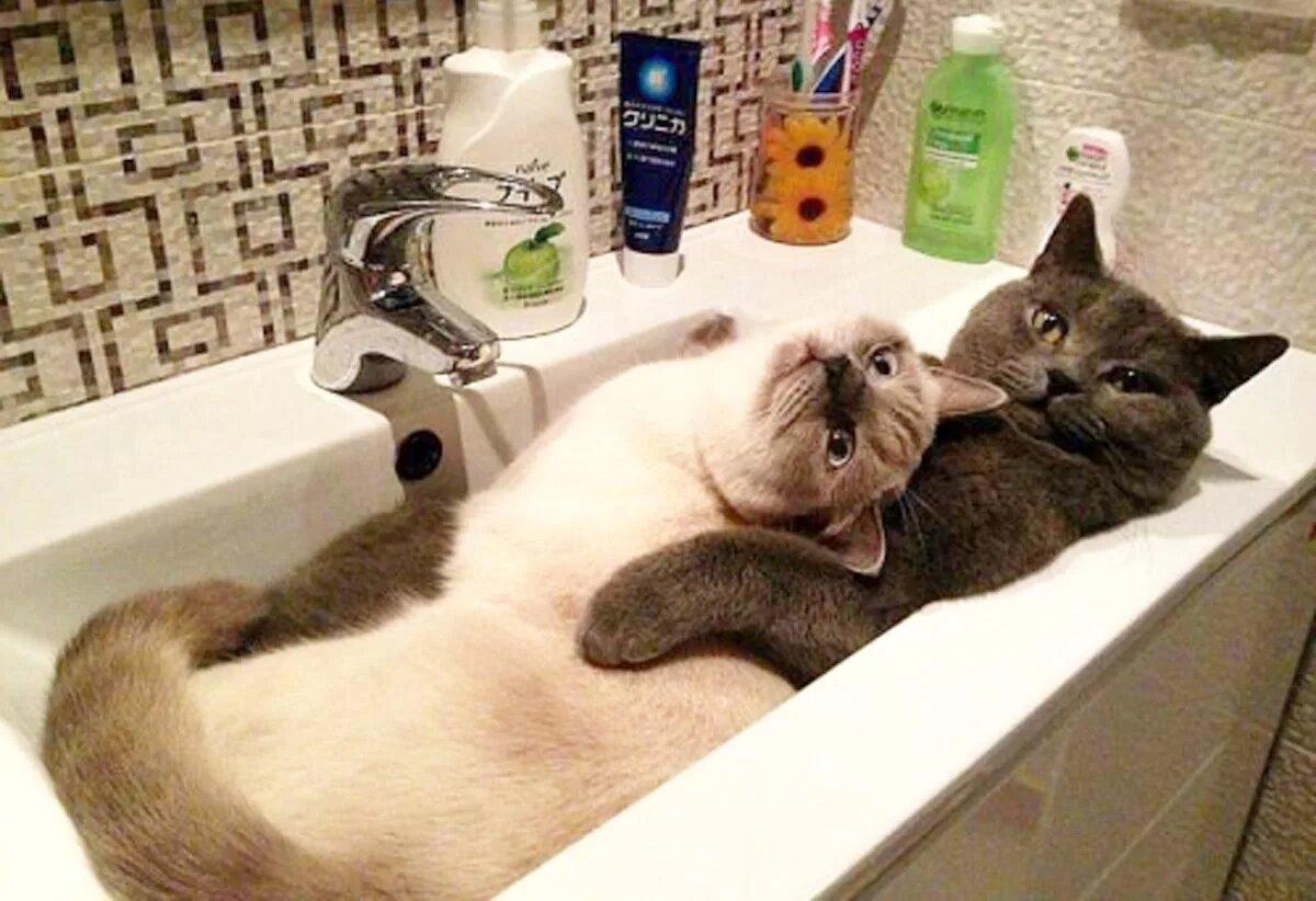 Новогодняя, кошки юмор картинки