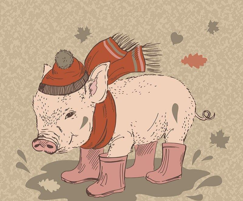 зодиак свиньи картинки