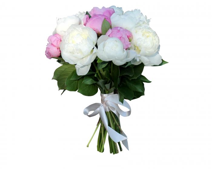 Картинки букеты пионовых роз на белом фоне