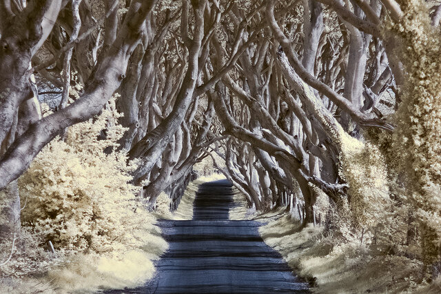 Картинки ирландия зимой, задолбали лет свадьбы