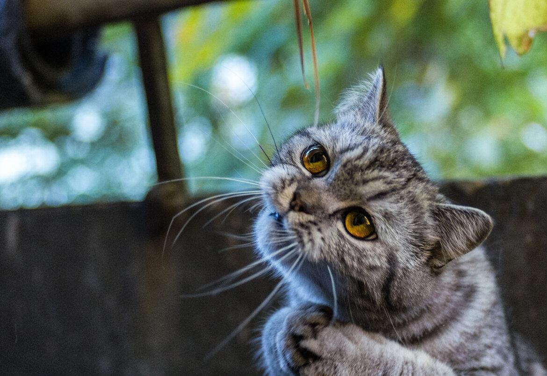 Отпуске, картинка с надписью кот в отпуске я за него