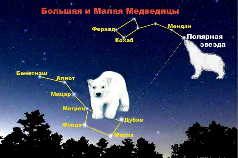 Малая и большая медведица созвездия картинка