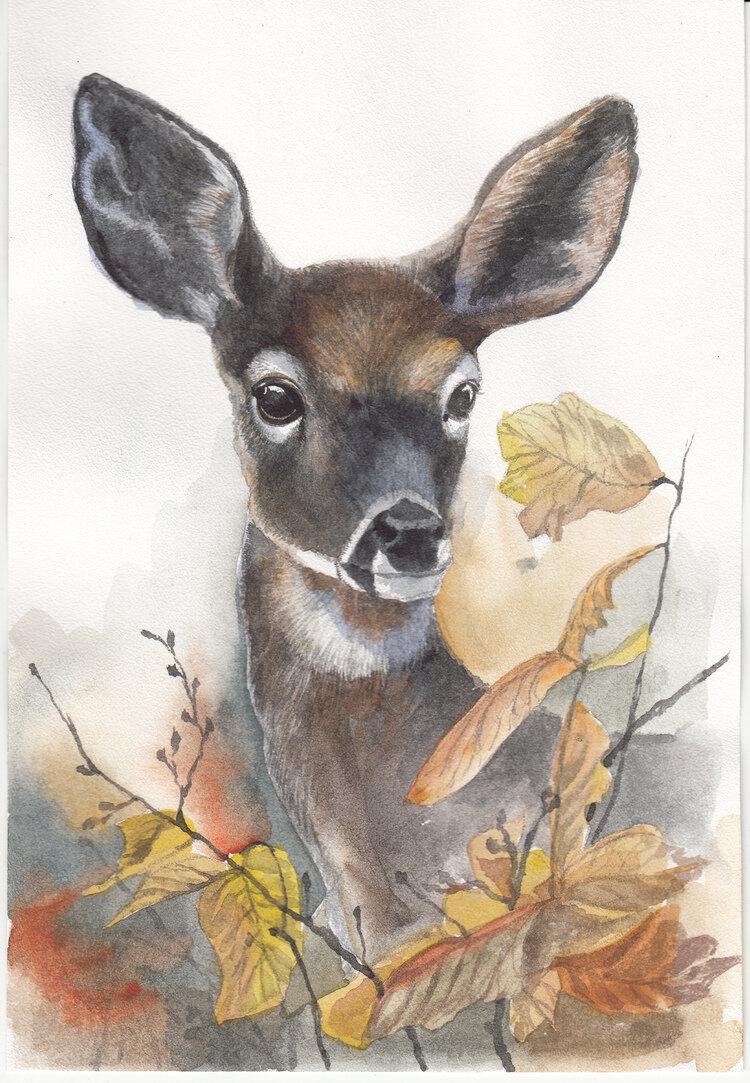 рисунки олененка цветными карандашами вечером