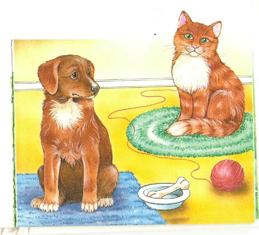 Домашние животные кошки и собаки картинки для детей