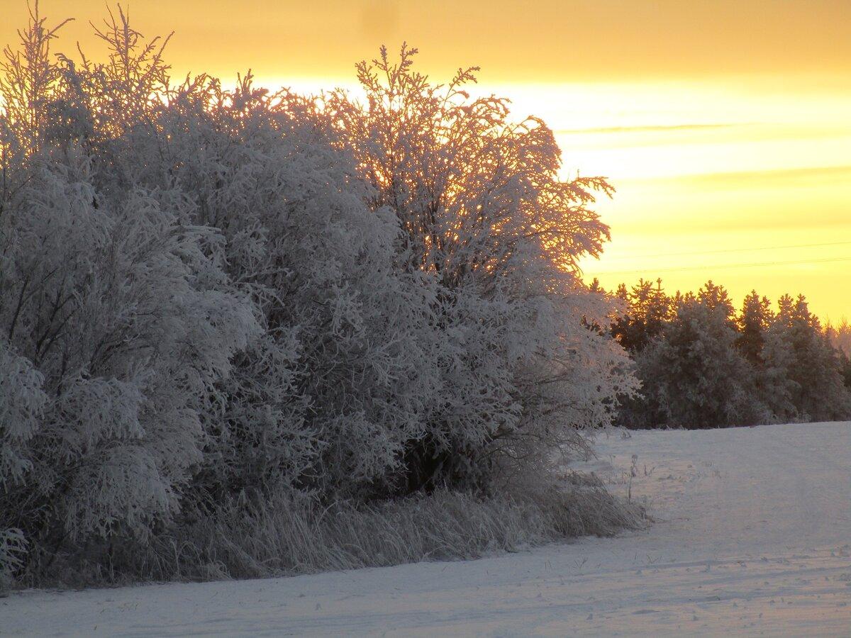 Чистота и свежесть декабря...#зима #декабрь #снег #иней #мороз #небо #солнце #деревья #лес #природа #красота #пейзаж #