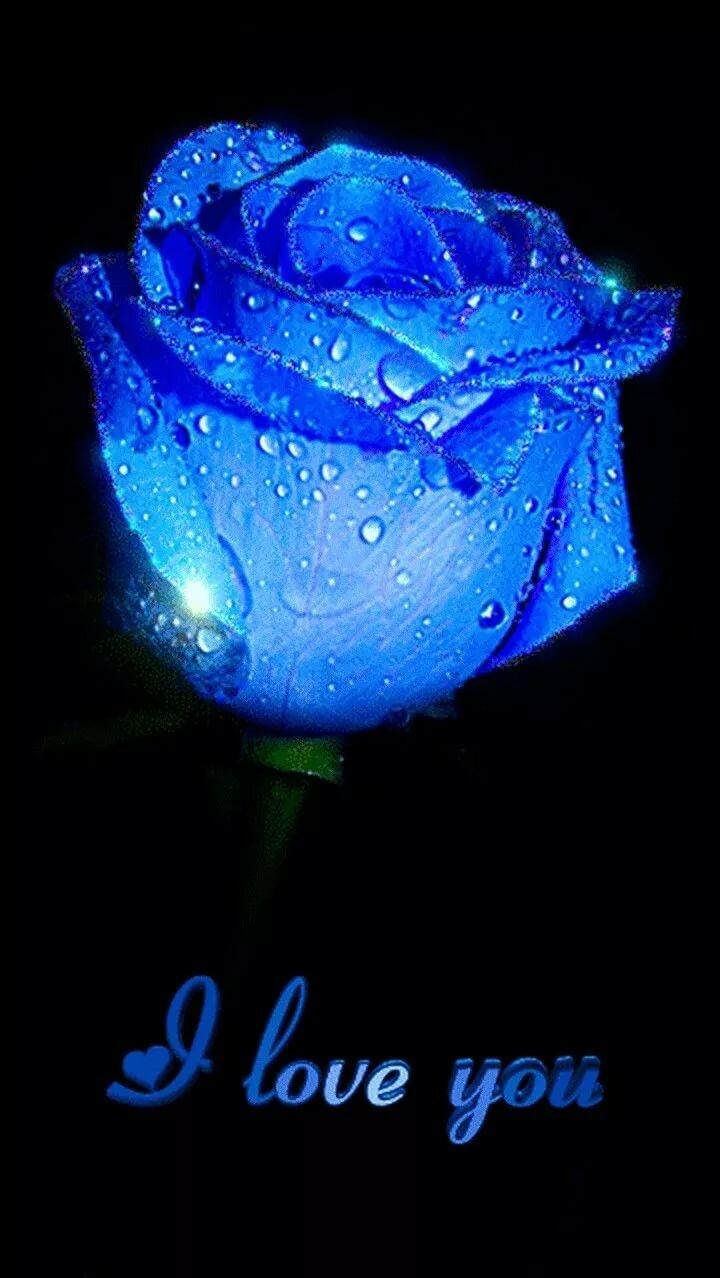 Картинки анимации синяя роза