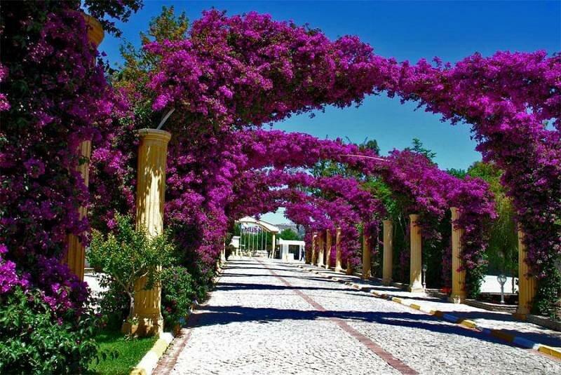 картинки израильские цветы стоит думать, что