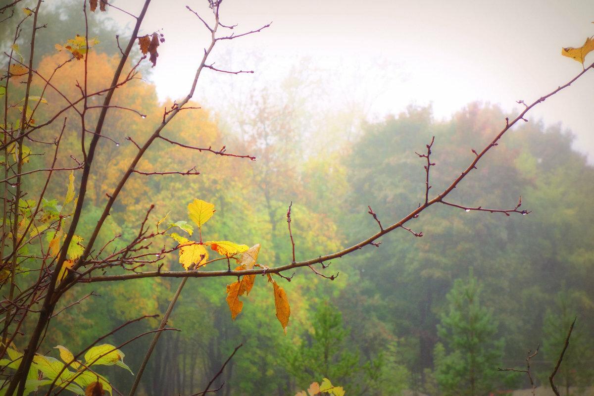 в тумане...#lyudamihailova #город #утро #туман #осень #парк
