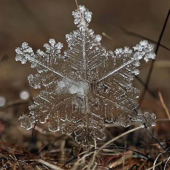 Снежинки-фото в картинках