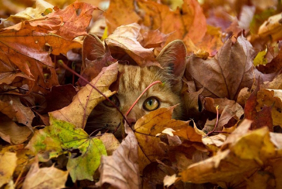 Открытки дню, картинки прикольные октябрь