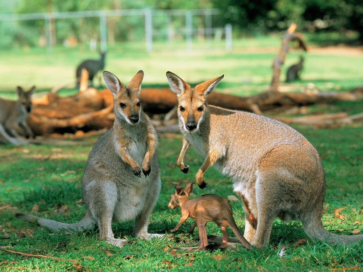изображения скорпиона кенгуру фото животного охлаждение, сборка все